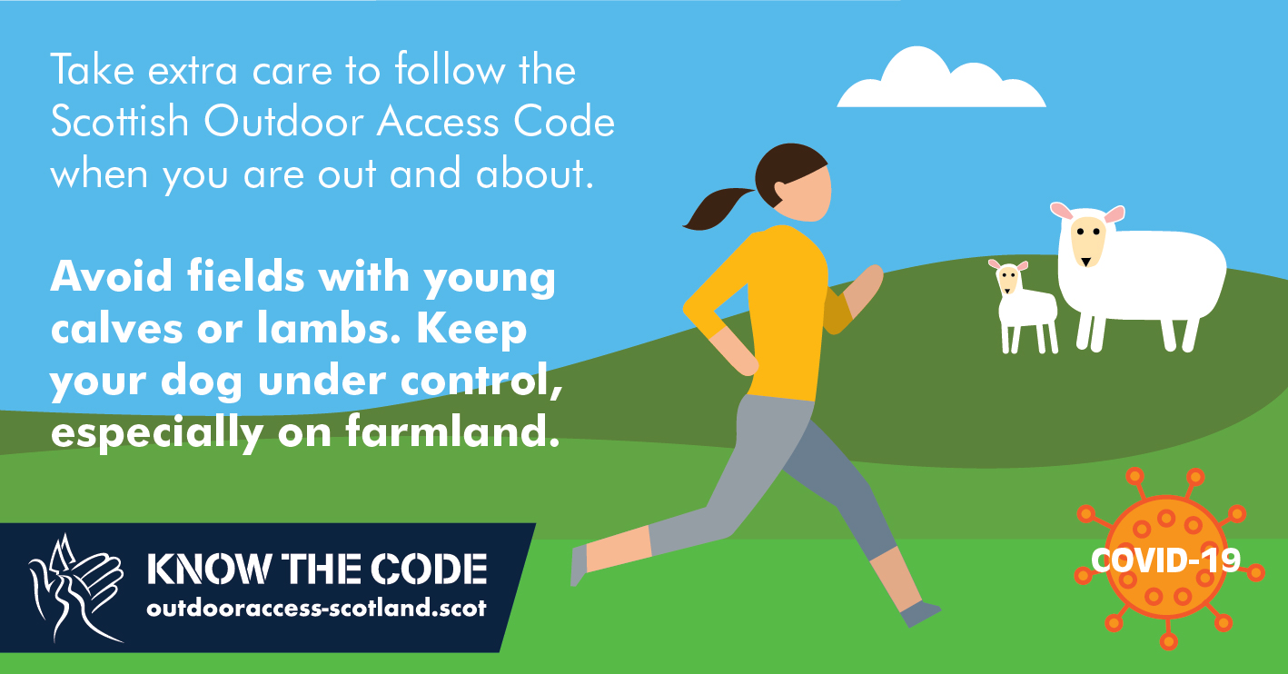 Avoid fields with young calves and lambs inforgraphic