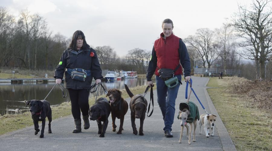 Commercial Dog Walkers near the Falkirk Wheel. ©Lorne Gill/SNH. For information on reproduction rights contact the Scottish Natural Heritage Image Library on Tel. 01738 444177 or www.nature.scot