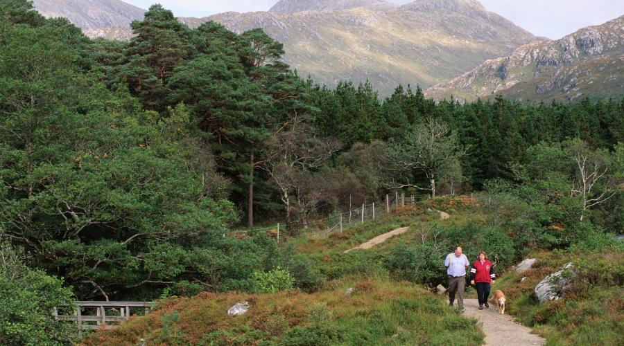 People walking on the woodland trail at Ariundle NNR, Ardnamurchan, West Highland Area ©Lorne Gill/SNH. For information on reproduction rights contact the Scottish Natural Heritage Image Library on Tel. 01738 444177 or www.nature.scot