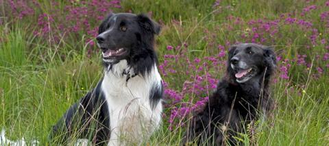 Dogs © Scottish Viewpoint